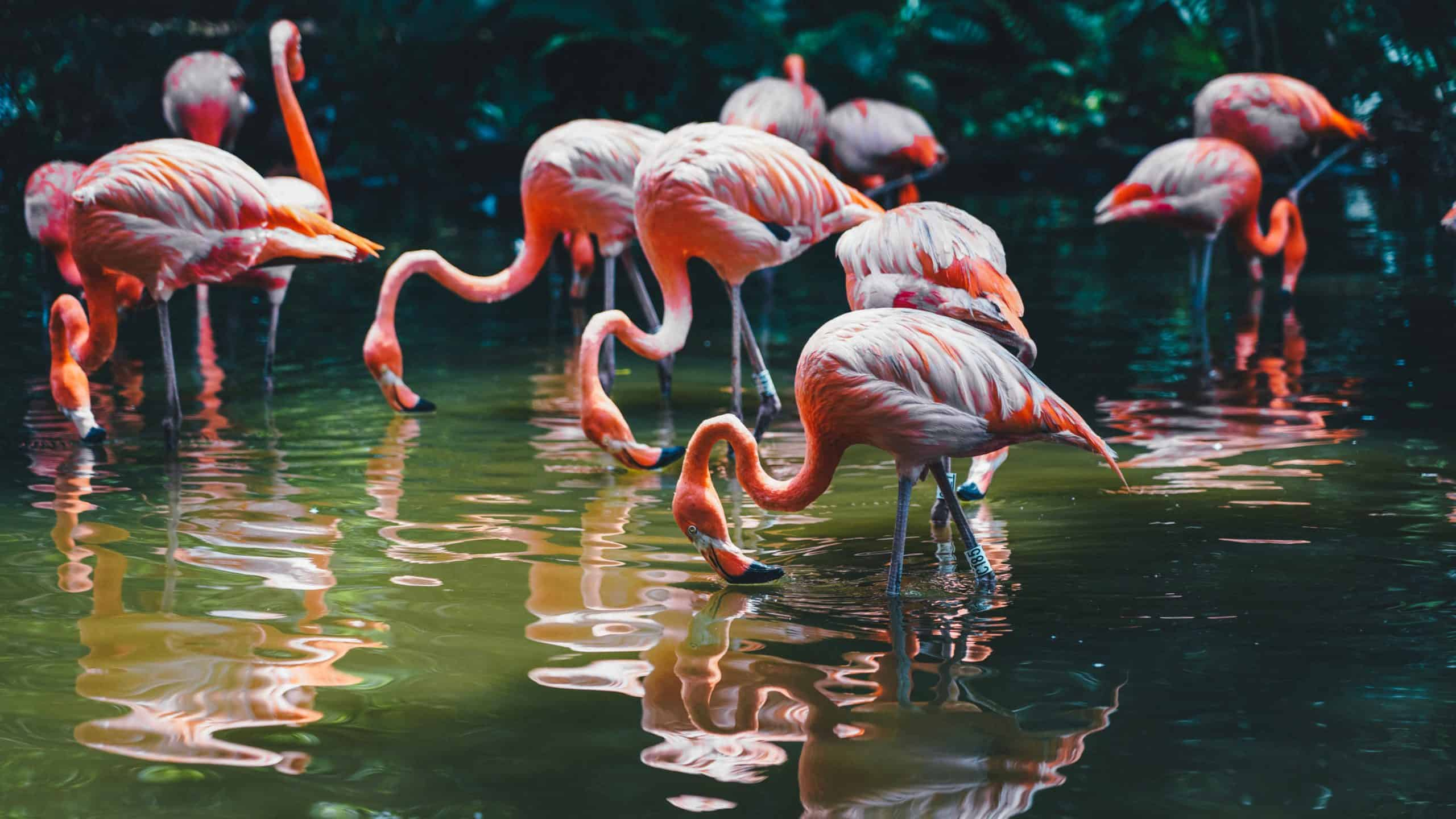 Flock of flamingoes drinking water in the sunshine